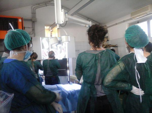 Corso pratico di Chirurgia Addominale I livello